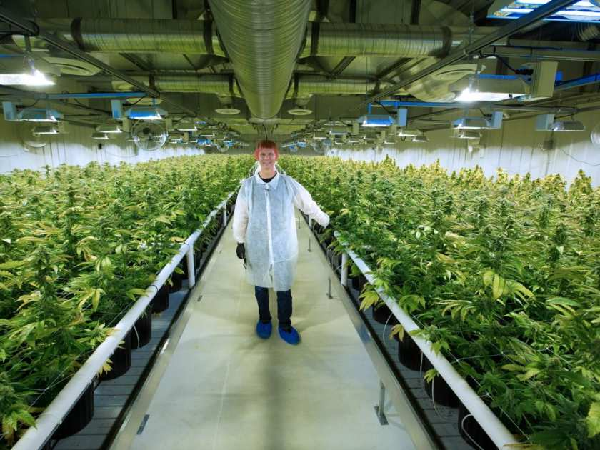 Medical pot company building huge production plant at for Grow room software